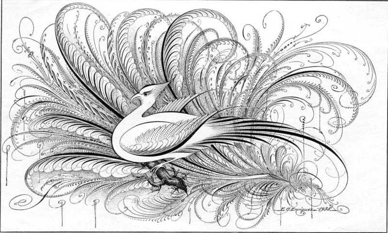 Bird Flourish EC Enriquez