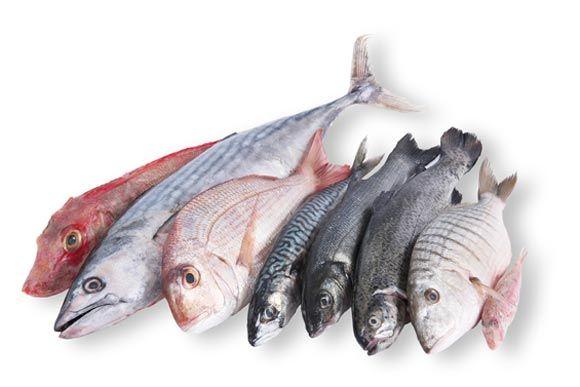 Verschiedene Fischarten liegen nebeneinander auf weißem Hintergrund