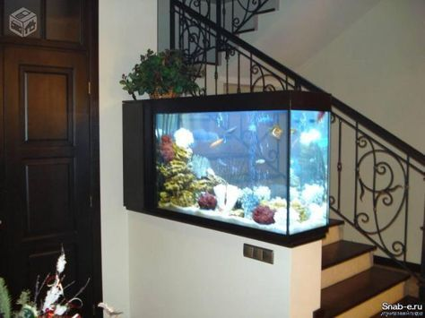 Feng Shui for Wealth with Fish Tanks | Fish tanks, Feng shui and Fish