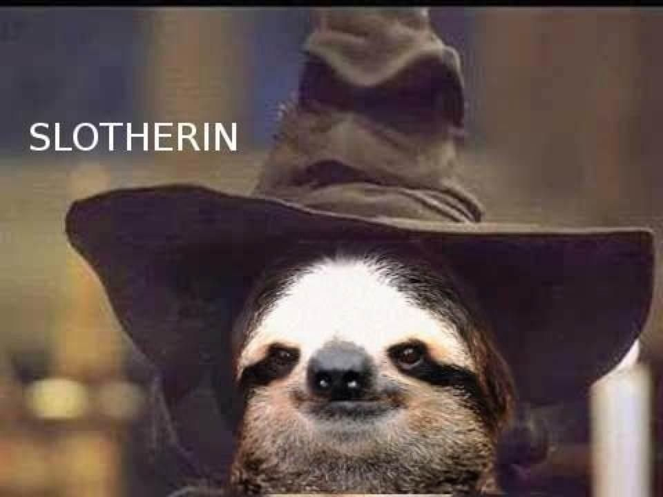 Harry Slotherin Is His Name Harry Potter Wortspiele Harry Potter Lustig Tiere