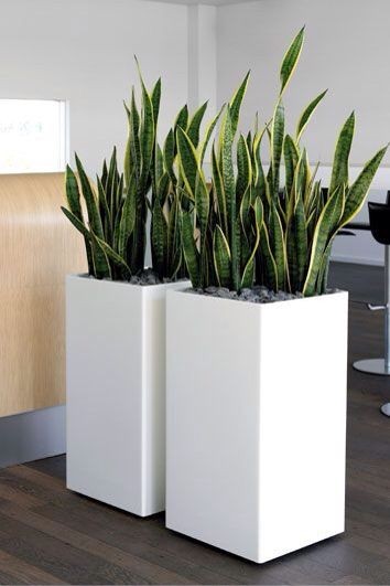 I Like The Size Here Interior Plants Design Square Planters White