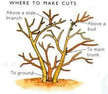 How to prune: Pruning doesn't come naturally. You need to learn where to make your cuts for the best results. So here's how and when, plus the tools you'll need.