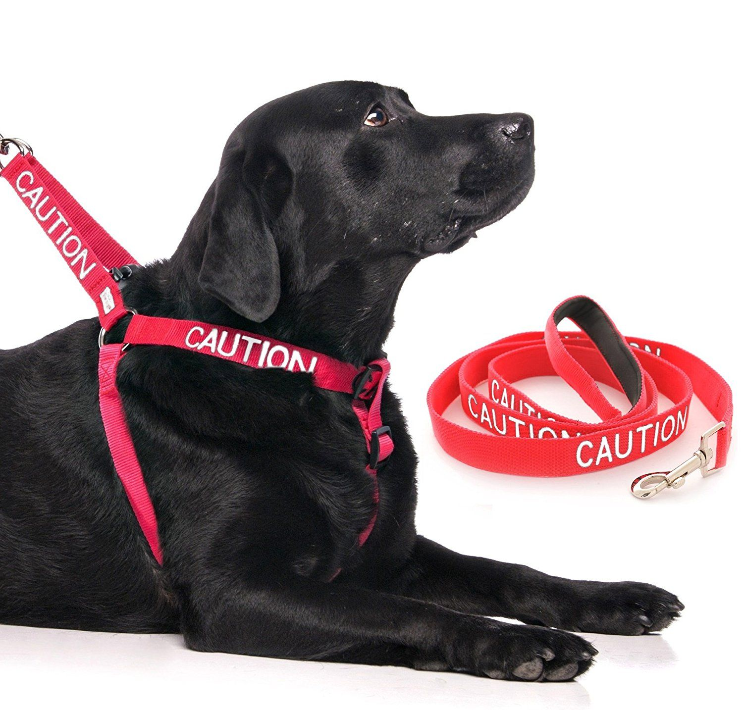 CAUTION Red Color Coded LXL Nonpull Dog Harness and 2 4