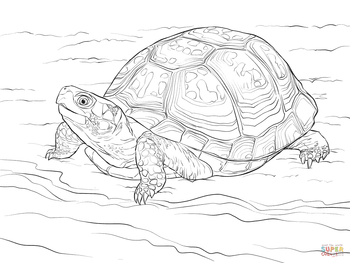 Cute Eastern Box Turtle Coloring page | Free Printable Coloring ...