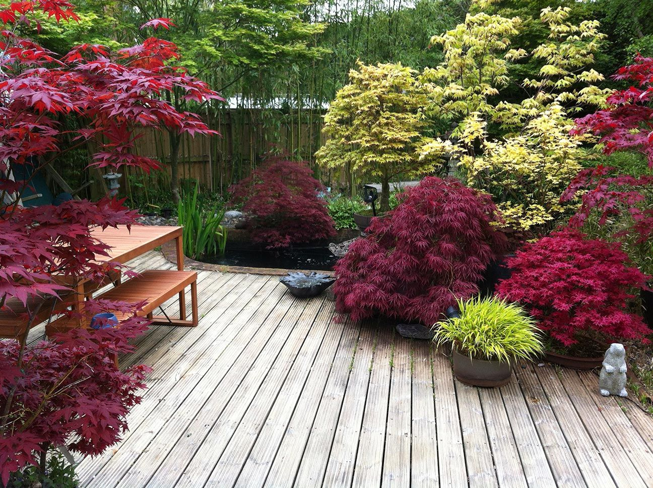 Japanese Maples Add Such Vibrant Colors And Unique Shapes To Any Landscape.  And They Can. Japanese Garden DesignJapanese GardensSmall ... Nice Look