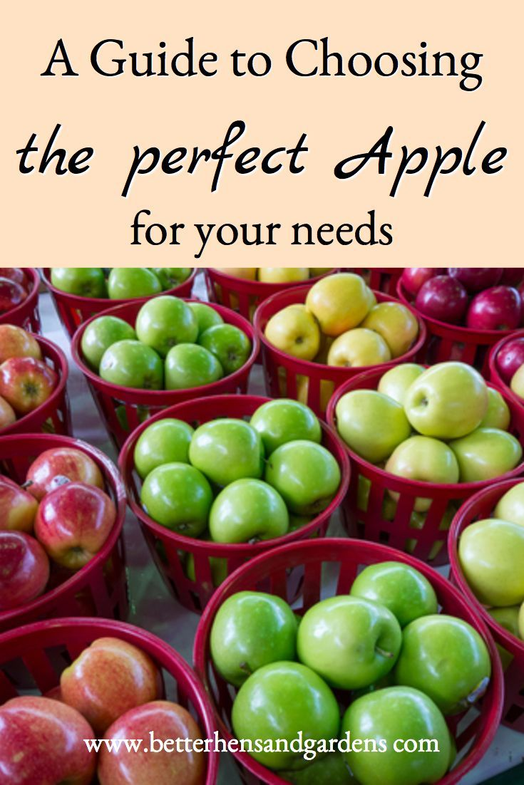 Guide for choosing the perfect apple variety to cook or