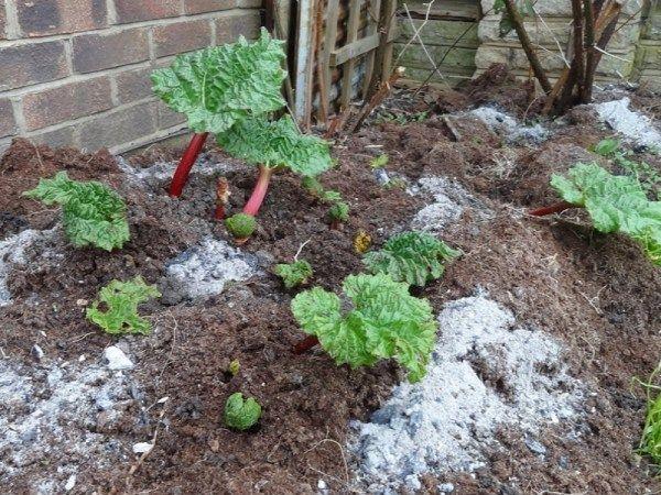 Comment Recycler La Cendre De Bois Au Jardin Jardin Jardins