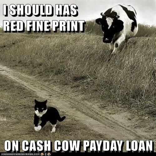 Payday loan 911 image 5