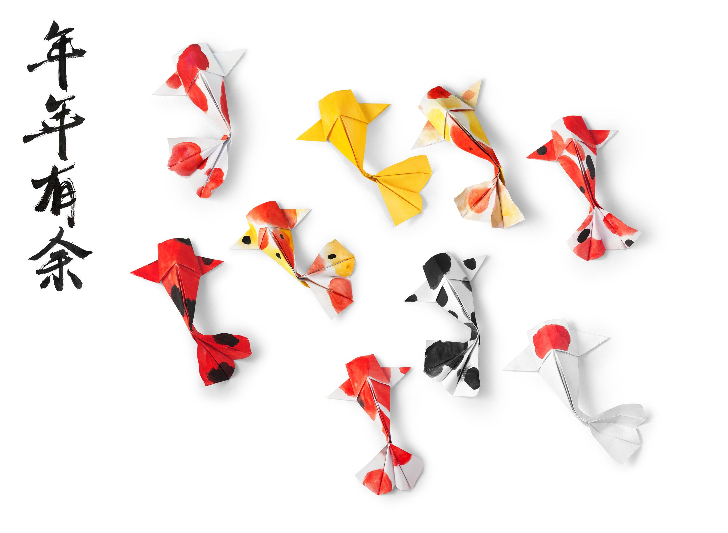 Photo of Koi Fish Gallery — Koi Story