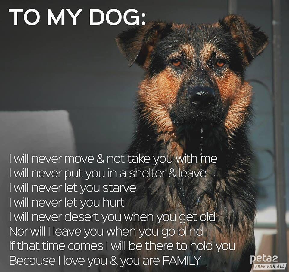 I Love My Dog Quotes To My Dog  Dog Quotes  Pinterest  Dog