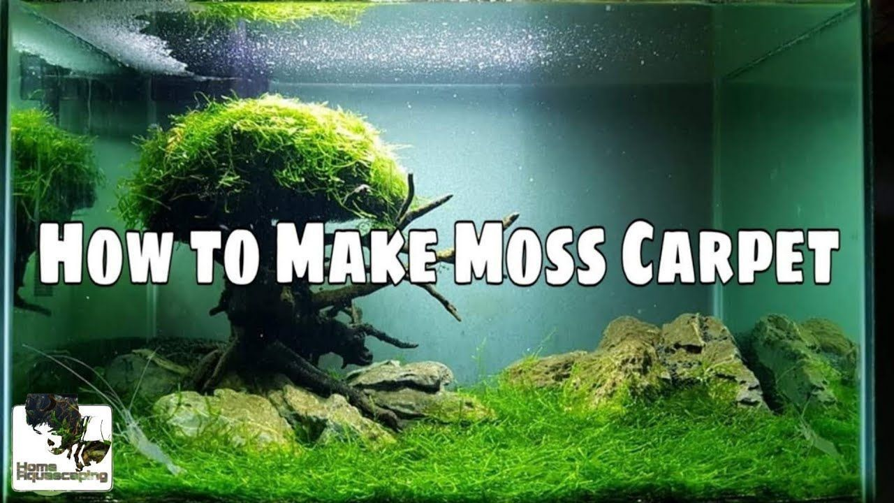 How To Make Moss Carpet Make Aquascape Aquascape Carpet Make Moss A Aquascape Carpet Moss In 2020 Aquascape Aquascape Design Aquascape Aquarium