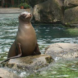 Attractions at NYC's Central Park Zoo  | Colorfulplaces.com #centralparkzoo #nyc #travelguide