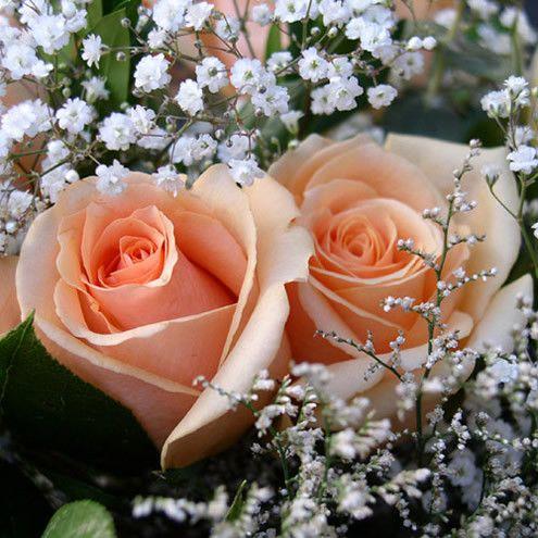 gifs les bouquets de fleurs d 39 amour les plus belles fleurs et raret s pinterest gifs et. Black Bedroom Furniture Sets. Home Design Ideas