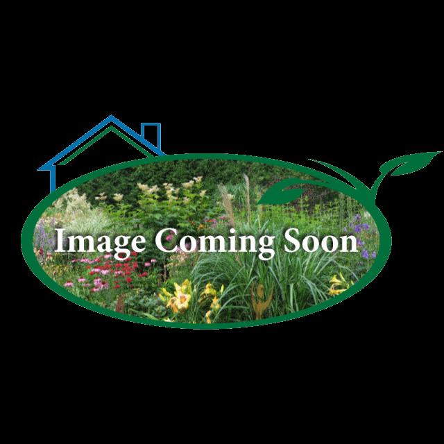 Kaleidochrome Unique gardens, Shadow, Hostas