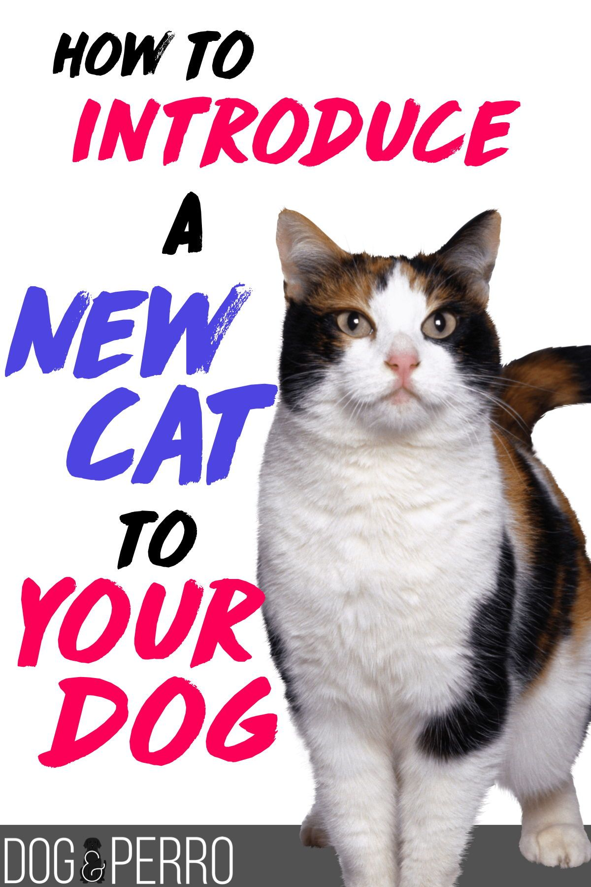 4 Simple Tips to Introduce a New Cat to your Dog