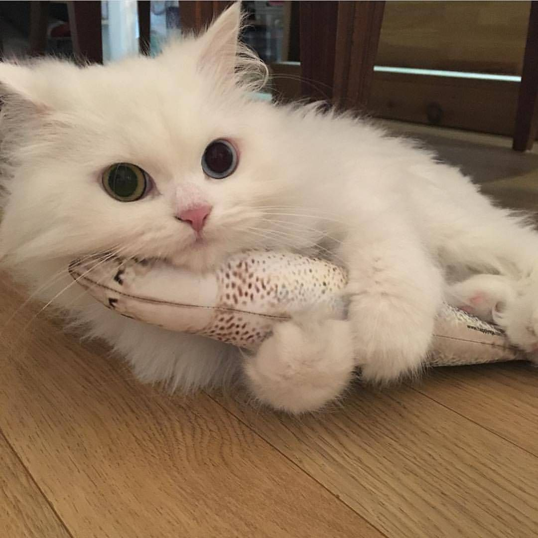 Happycatclub From Zzingy Thecat Double Tap Follow Happycatclub And Tag Happycatclub For Your Chance To Be Fea Cute Baby Animals Cute Cats Cute Animals
