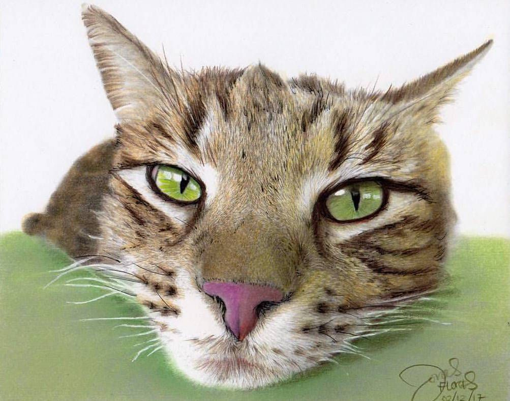 Tutorial u coloralong learn how to color this cat pinterest