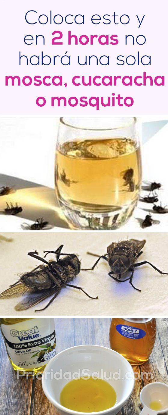 Elimina Las Moscas Cucarachas Y Mosquitos De Tu Casa En Solo 2 Horas Con Imágenes Recetas De Limpieza Trucos De Limpieza