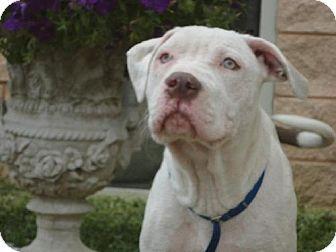 Pin By Tamra Lacroix On Adopt A Pet Pets Pet Adoption White