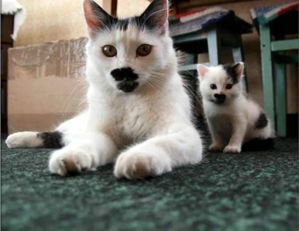 Забавные фотографии животных,которые поднимут настроение даже в самый хмурый понедельник