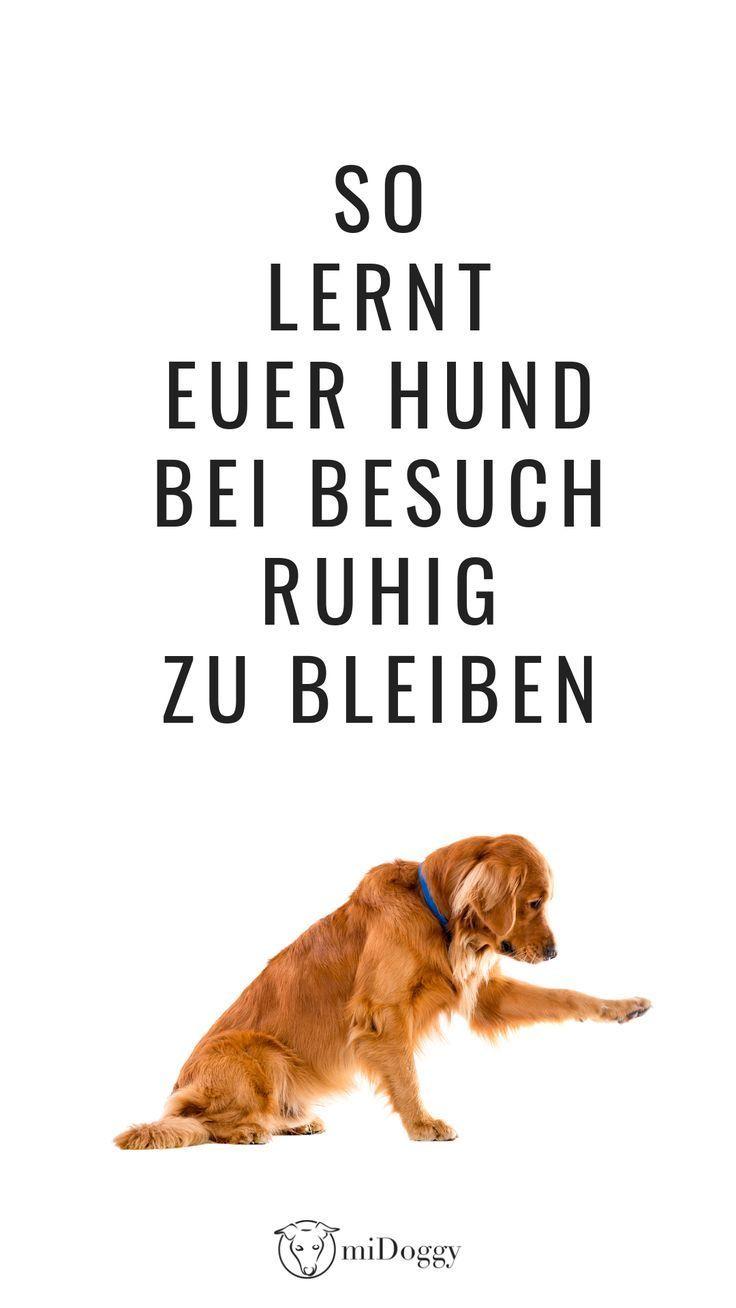Besuch Kommt Das Musste Mia Lernen Mit Bildern Hundetraining Hundchen Training Hunde