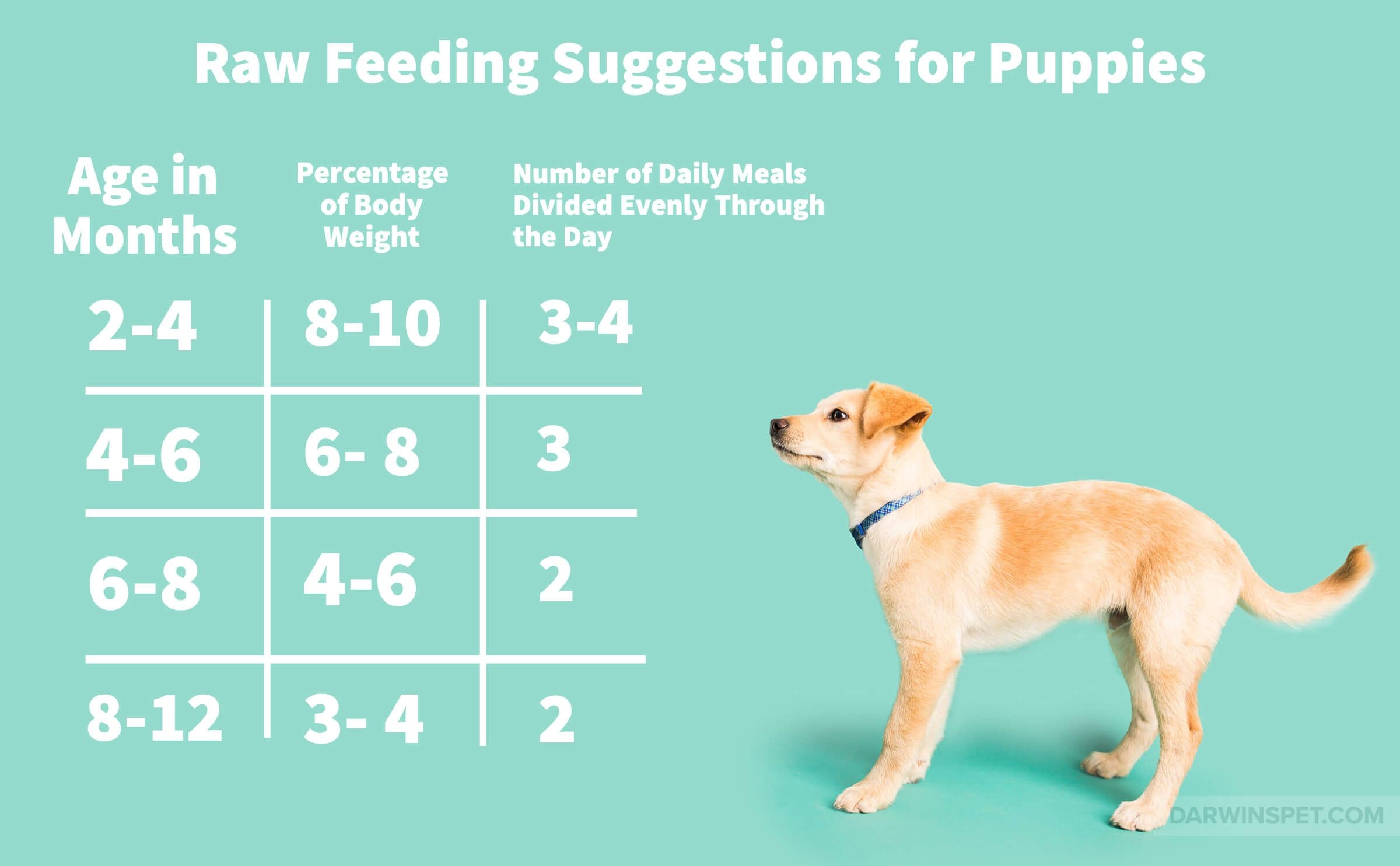 Is a raw puppy food diet right for your pet in 2020