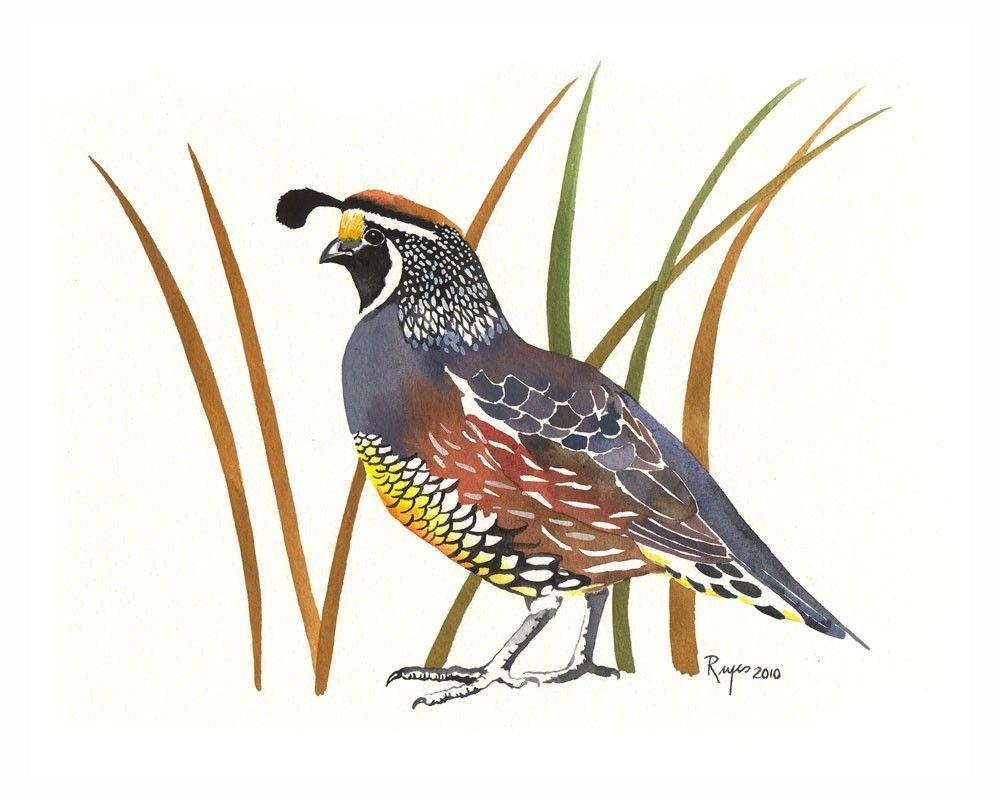 ORIGINAL Watercolor Bird Painting / Strutting / by reyespaintings