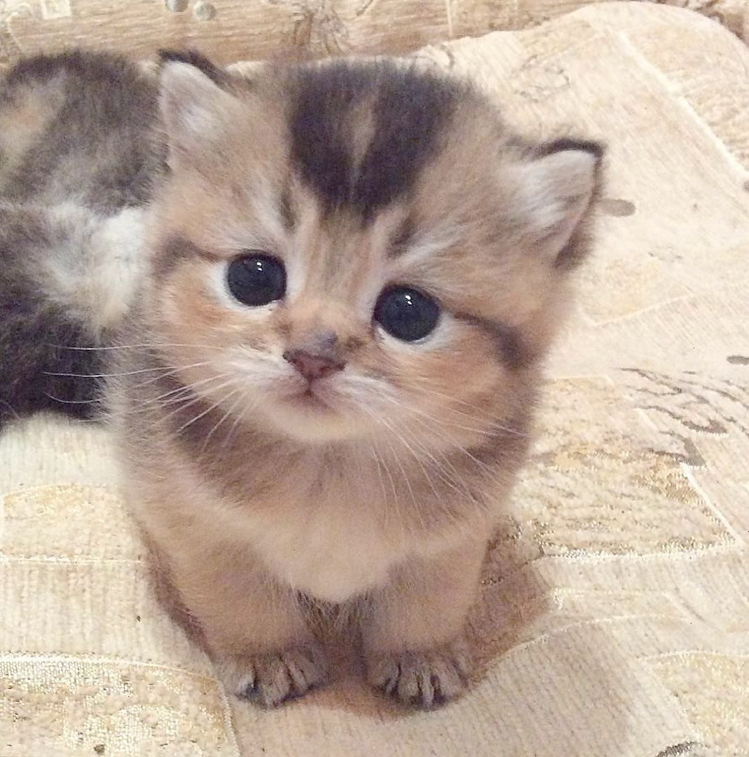 I Ll Help You Dad With Images Kittens Cutest Baby Cats Cute Animals