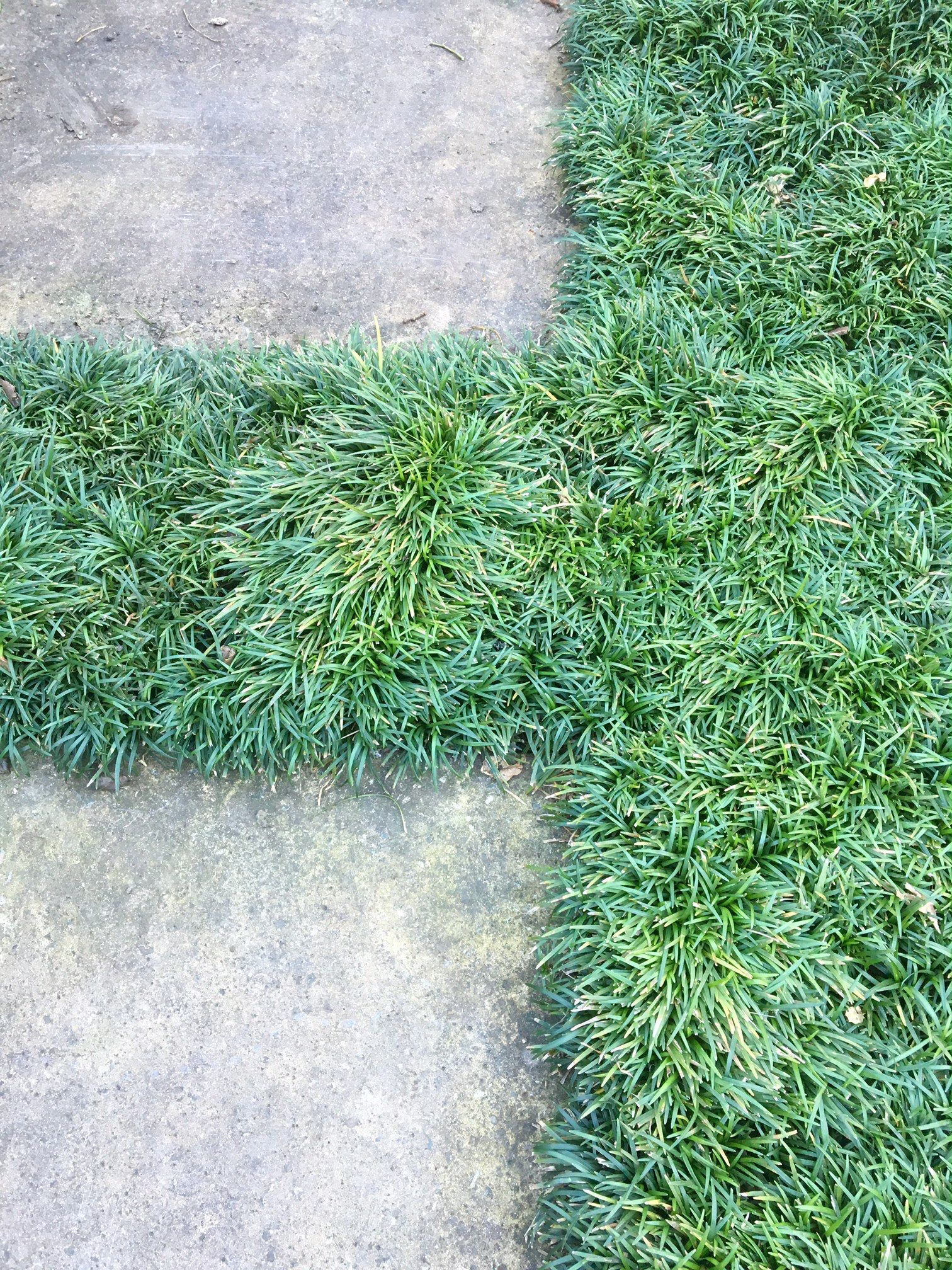 Hardscaping 101 Design Guide For Fences Height Styles: Hardscaping 101: Ground Covers To Plant Between Pavers