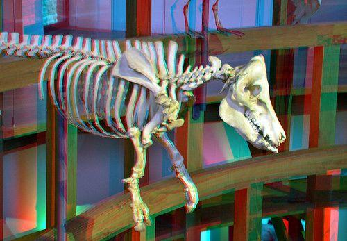 Theatrum Anatomicum Leiden 3D