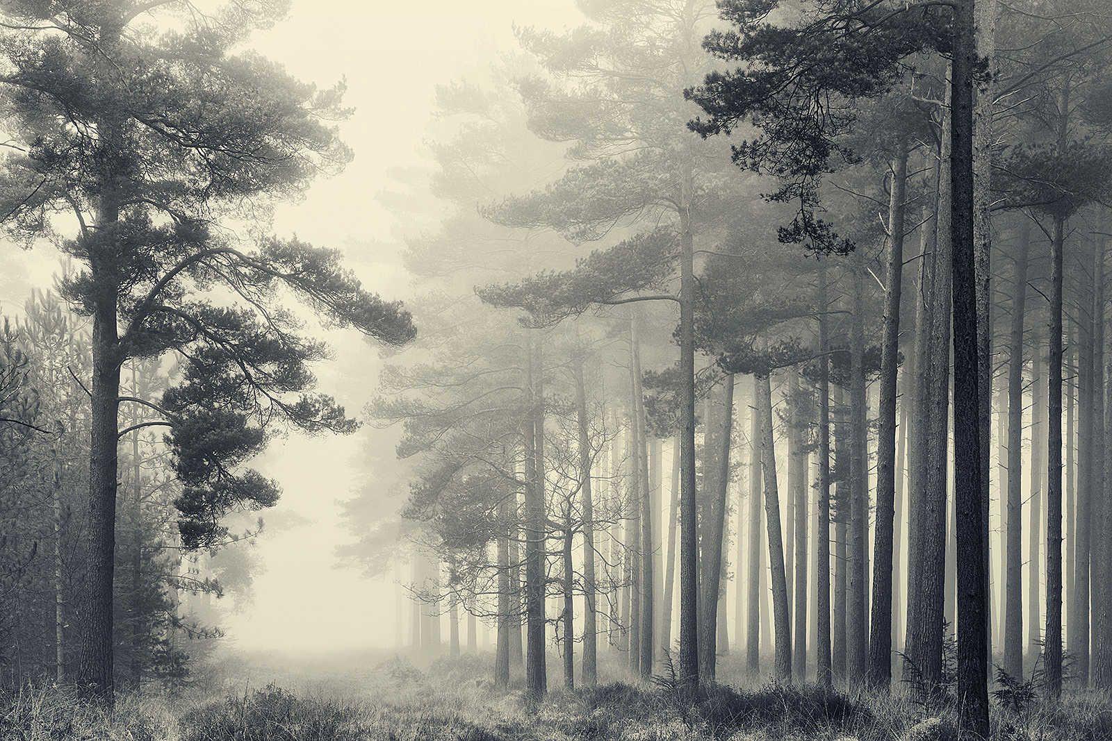 David Baker Trees David Baker Lumas Landschaftsbilder Landschaftsfotografie