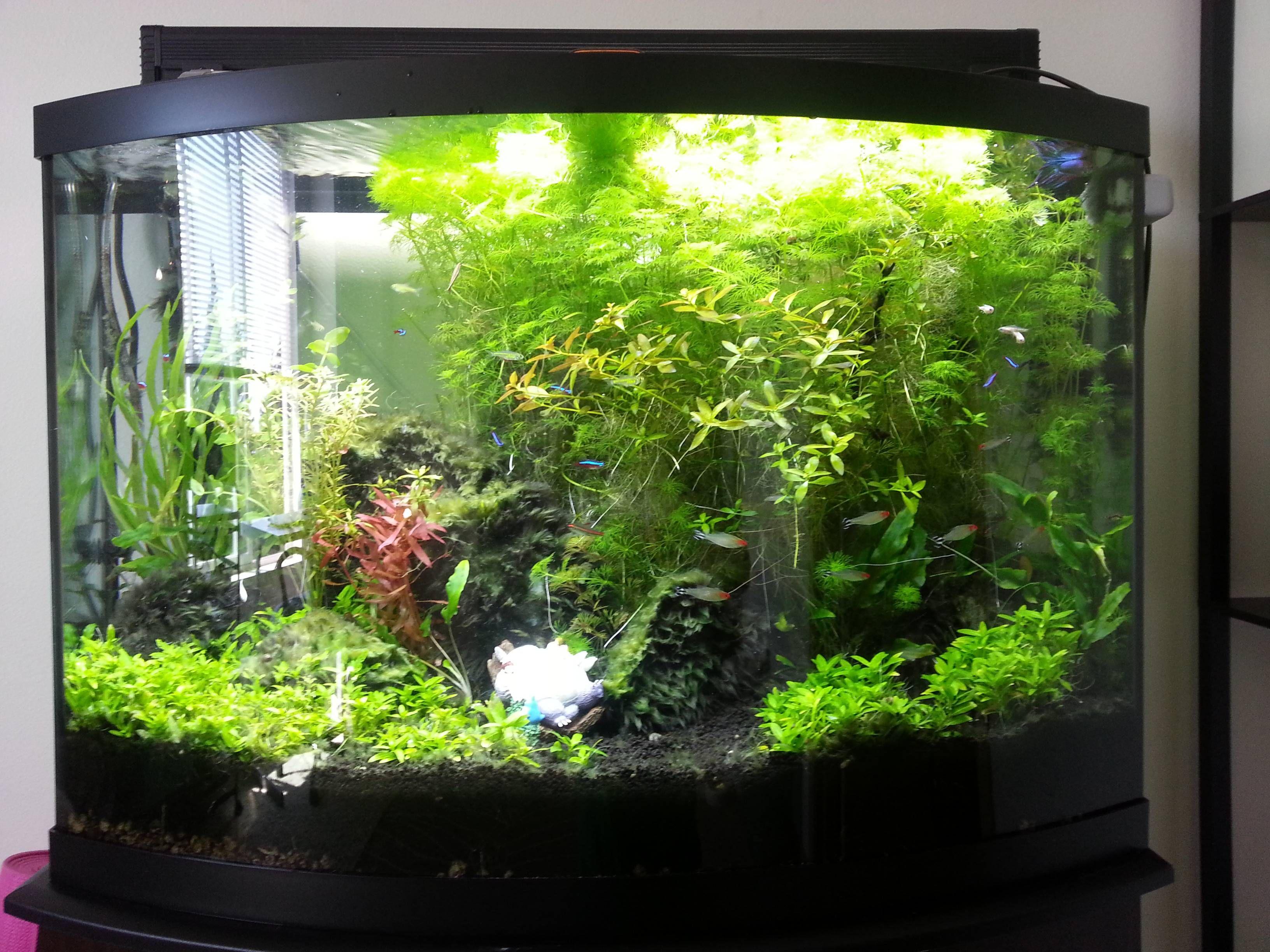 36 gallon aqueon bowfront lighting 30 finnex plant plus for 30 gallon fish tank