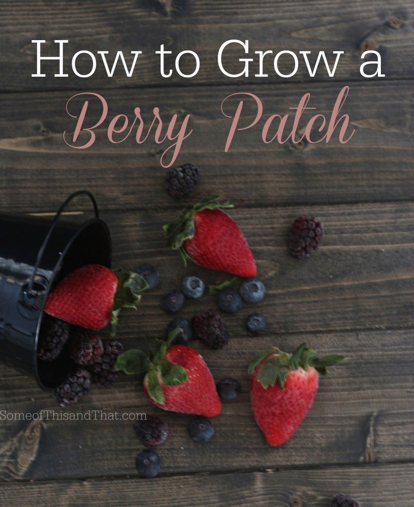 How to grow a berry patch edible garden growing