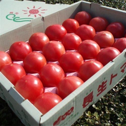 長生ながいきトマト (4kg)