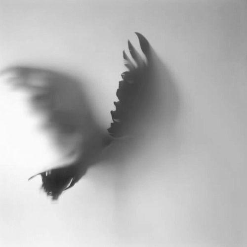 Black White Photography Nature At Higit Pa 73 Tumblr