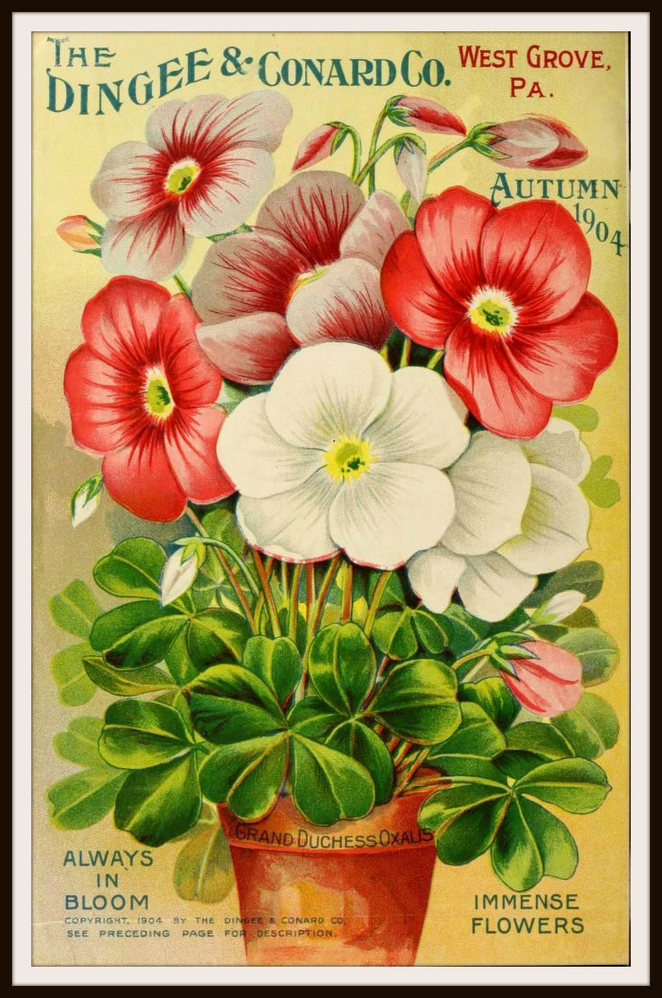 Vintage Reproduction Seed Pack Cover Art Print | Pinterest | Obst ...