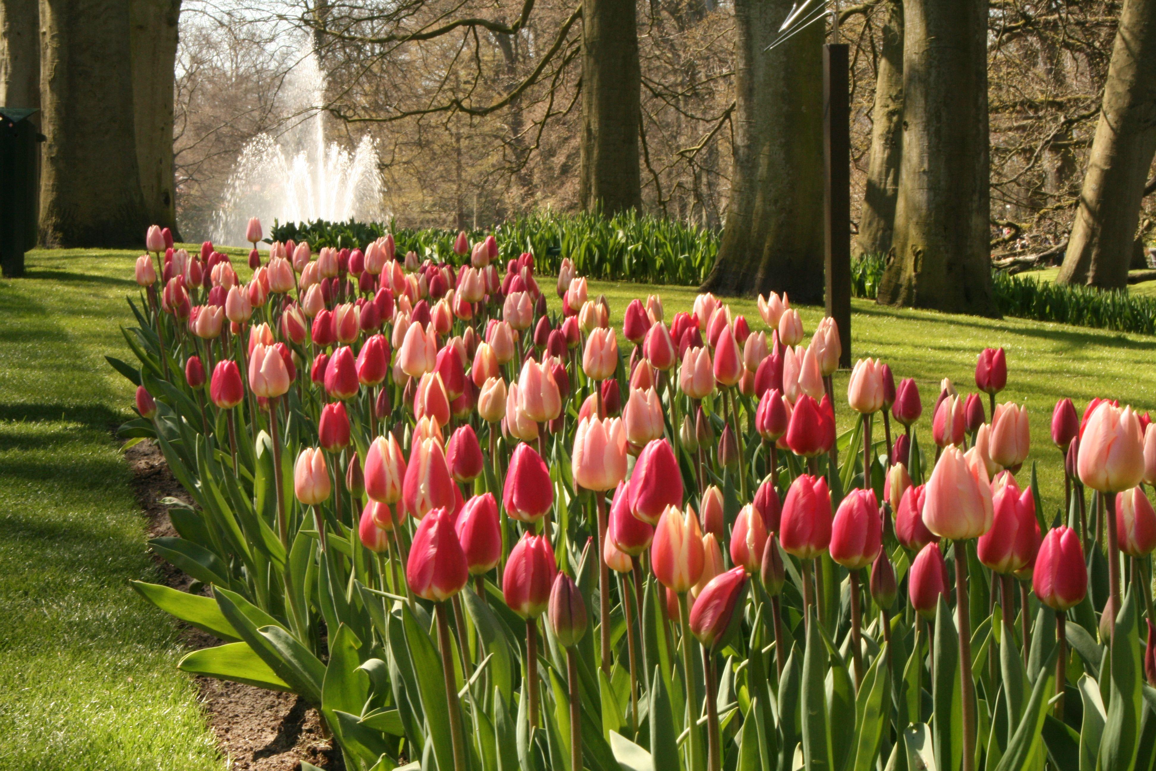Tulips and fountain Keukenhof Gardens, Netherlands | The Netherlands ...