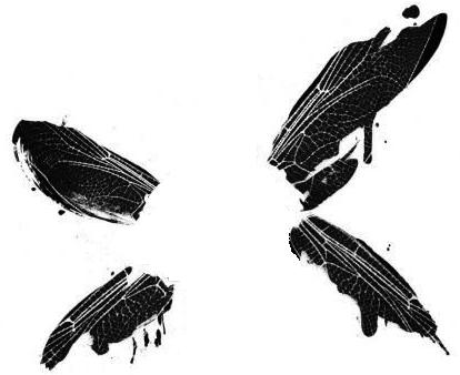 Dragonfly Wings From Linkin Park Hybrid Theory Album Art Tatuirovki