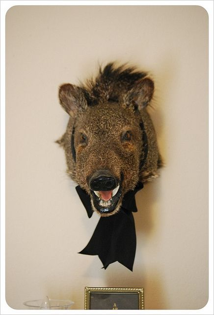 I'm gonna put a bowtie on my taxidermied bunny now too!