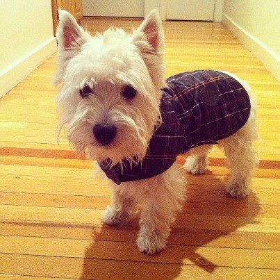 Pets Love To Wear Dog Coat Waxed