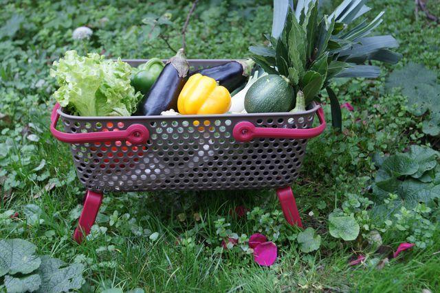 Ce panier en plastique est ultra pratique pour vos activités de jardinge au quotidien