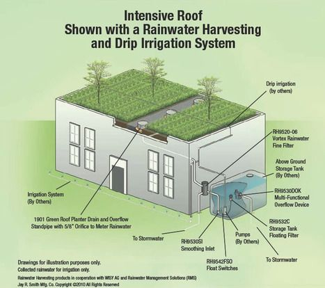 Green roof drains intensive roof shown with a rainwater for Rain drainage system