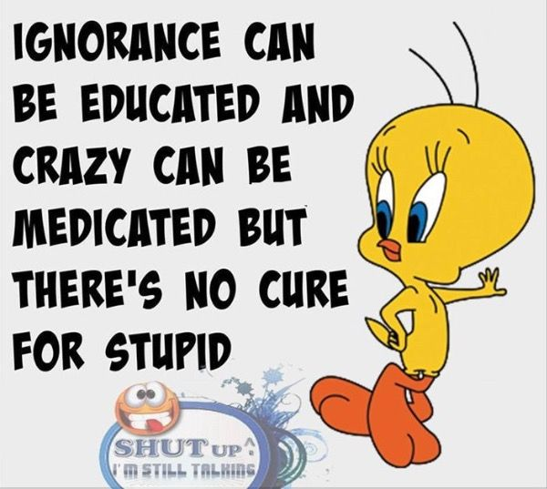 Minion Movies, Ignorance Can Be Educated And Crazy Can Be Medicated But  Thereu0027s No Cure For Stupid, No Cure For Stupid Funny Quotes Quote Crazy Funny  Quote ...