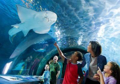 Shark Tunnel, Newport Aquarium (With images)   Newport ...