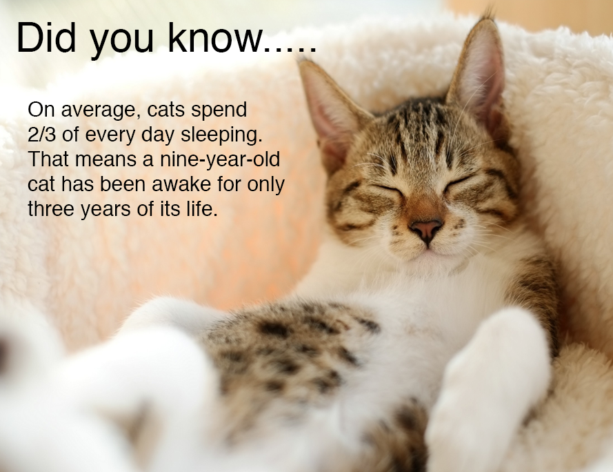 Did You Know? Cats Pinterest Cat