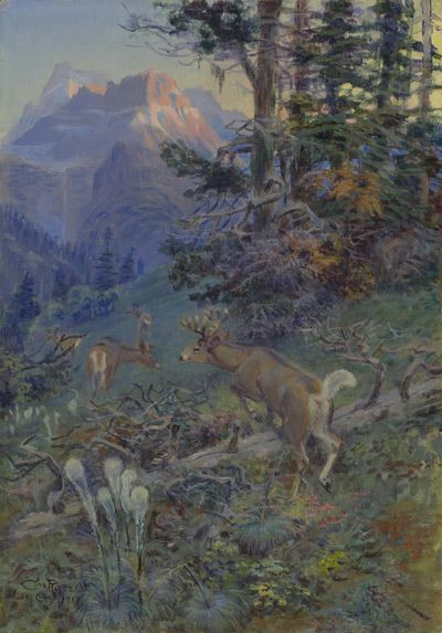 Sid Richardson Museum: Deer in Forest (White Tailed Deer) by Charles M. Russell
