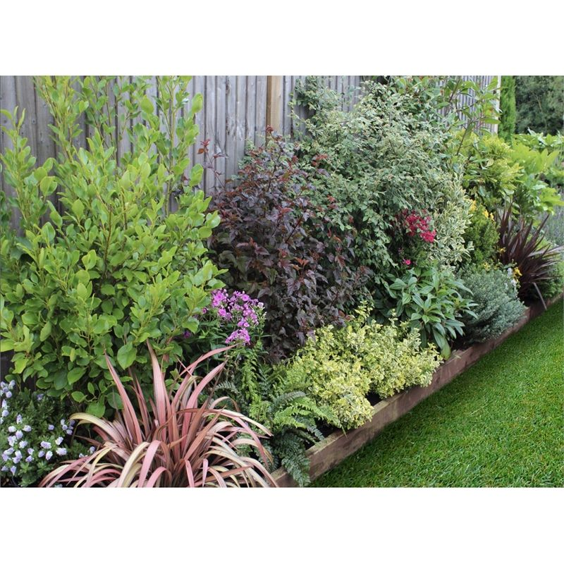 Find Evergreen Border 10m x 40cm at Homebase. Visit your ...