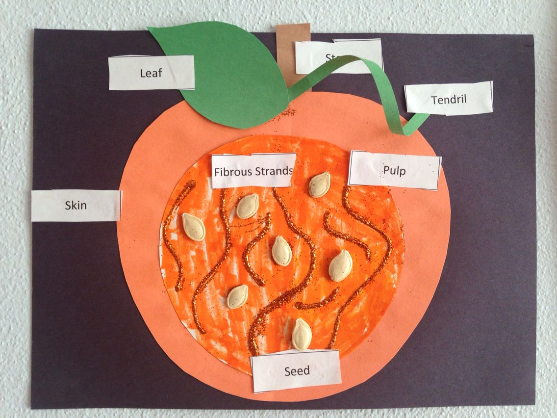 Parts Of A Pumpkin Craft
