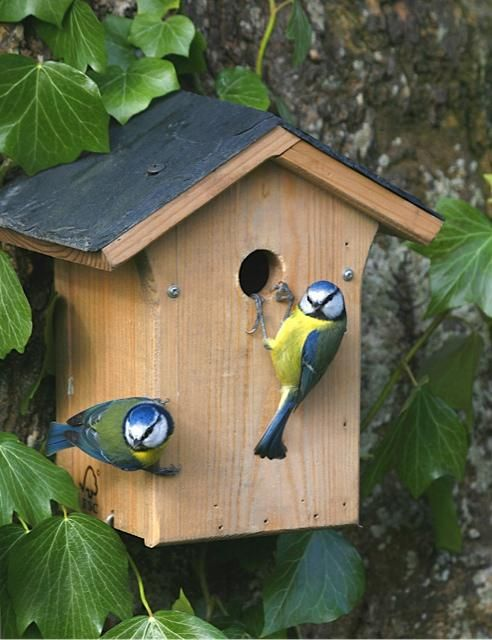 TRADITIONAL SMALL BIRDS NESTING BOX SPARROWS BLUE TITS WOODEN GARDEN NEST HOUSE