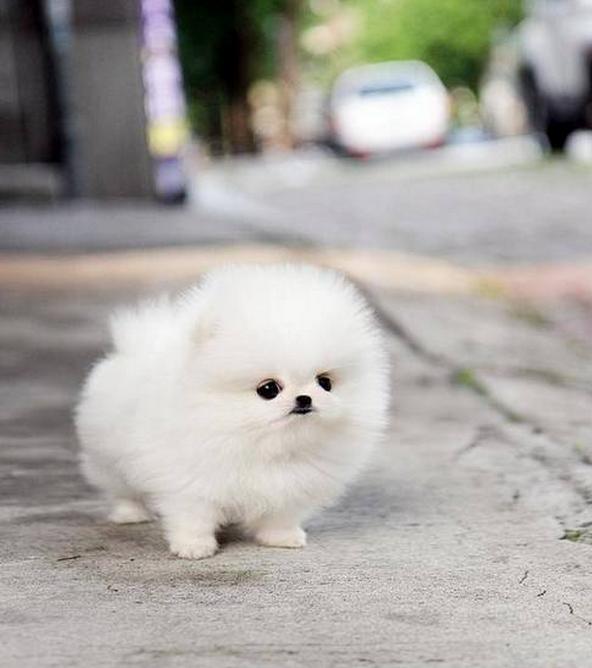 เอาใจคนร กมะหมาแสนน าร ก ด วยล กส น ขส ดน าร กน าเล ยง ร ปท 35 Cute Fluffy Dogs Cute Animals Puppies